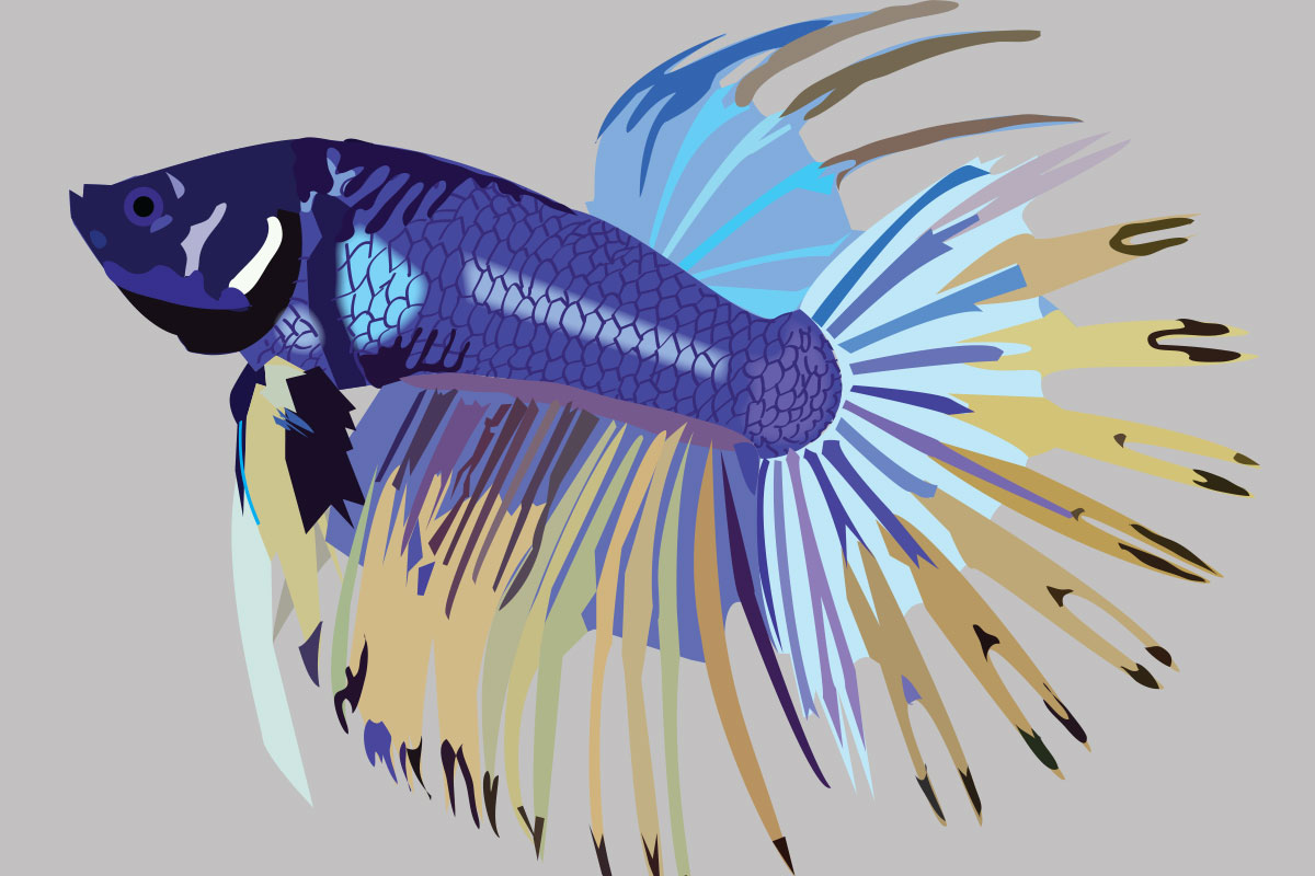 Betta Fish Illustration